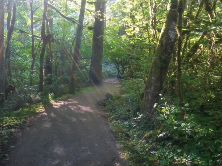 path_15946bc